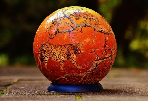 puzzle ball leopard wild animals