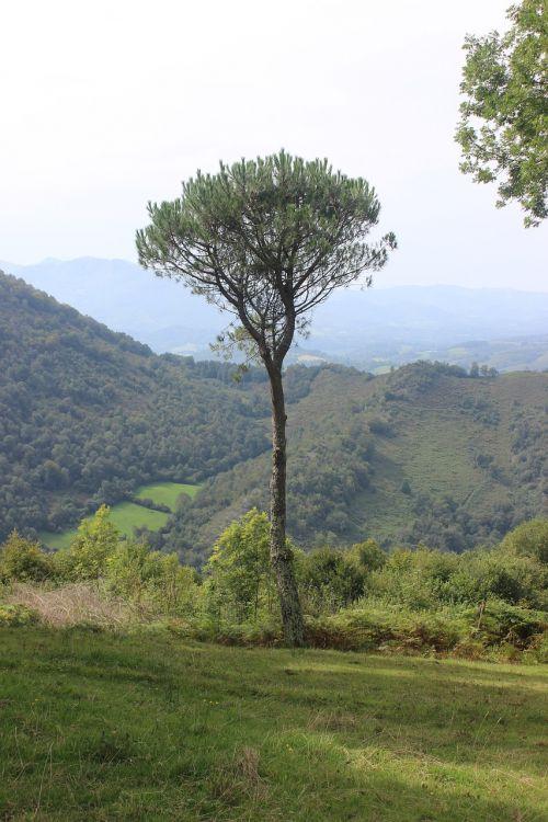 pyrenee mountain lanne in baretous