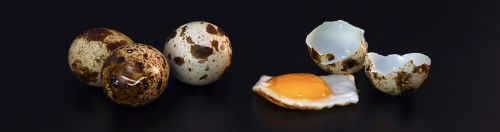 quail egg shell fried