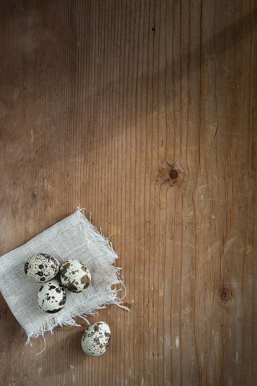quail eggs egg small eggs