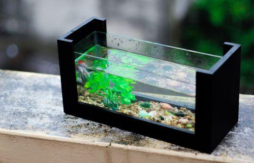fresh aquarium fish