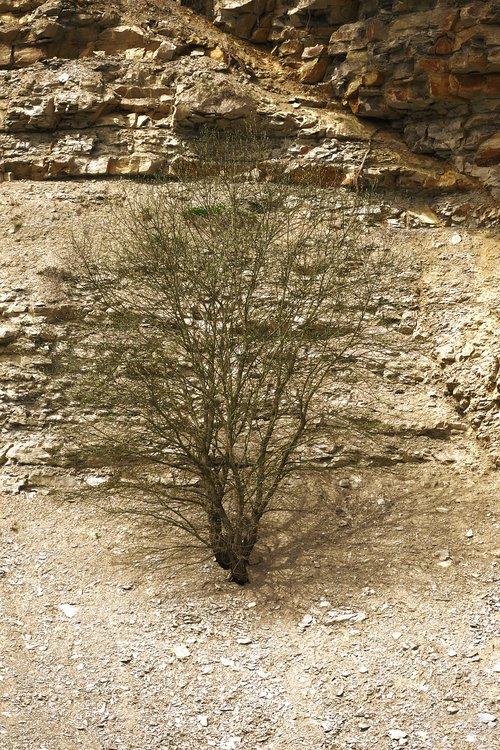 quarry  bush  dry