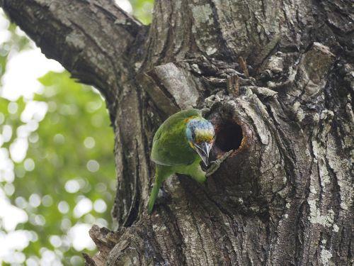 quasi woodpecker colored birds monk