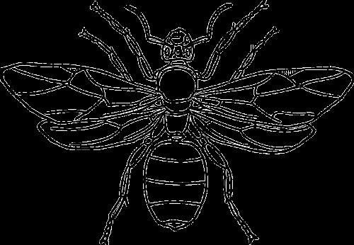 queen ant wings