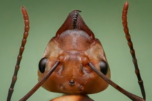 queen ant ant ant head