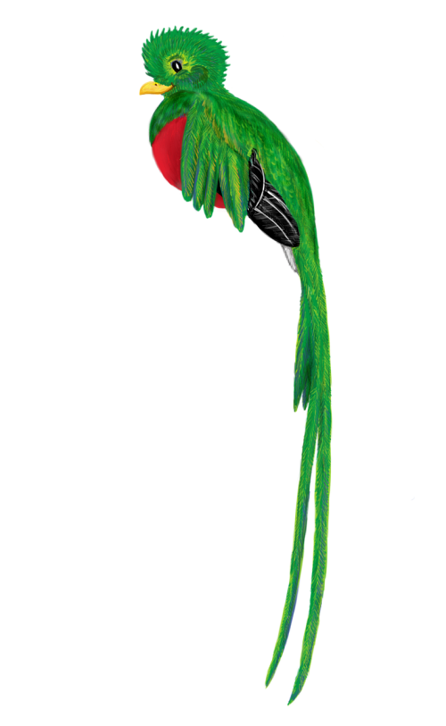 quetzal bird animal