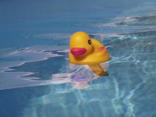 quietschentchen pool summer