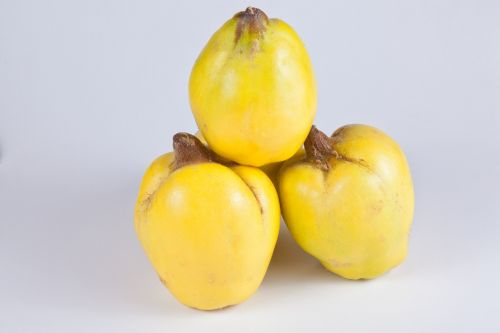 quince yellow fruits