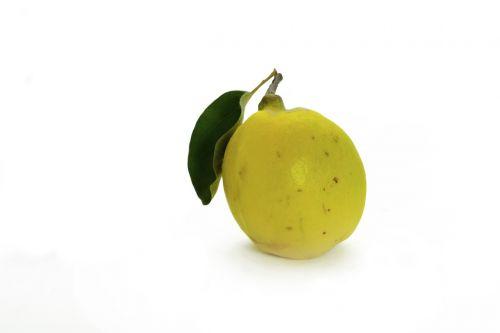 quince fruit pome fruit