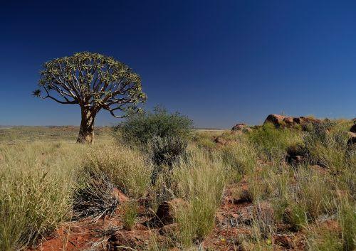 quiver tree tree quiver