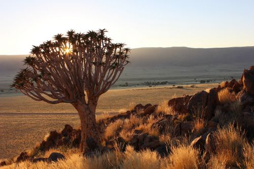 quiver tree namibia sunset