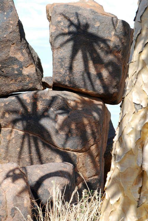 quiver tree shadow stones