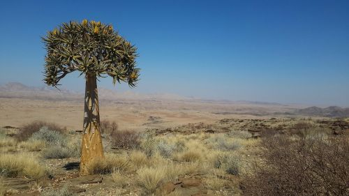 quiver tree namibia valley of a thousand hills