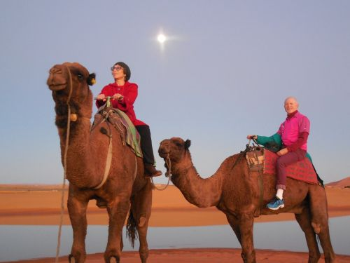 rabat morocco,camels,moroccan,rabat,culture,desert,sahara,sand,scenic,tranquil,vacation,africa