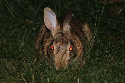 rabbit bunny evil