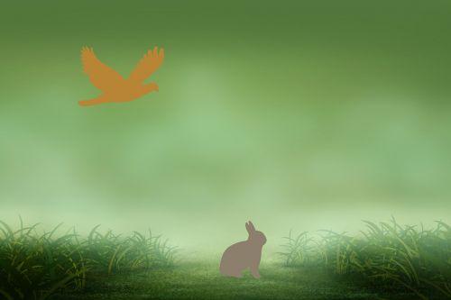 rabbit eagle drawing