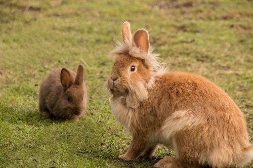 rabbit cute fur