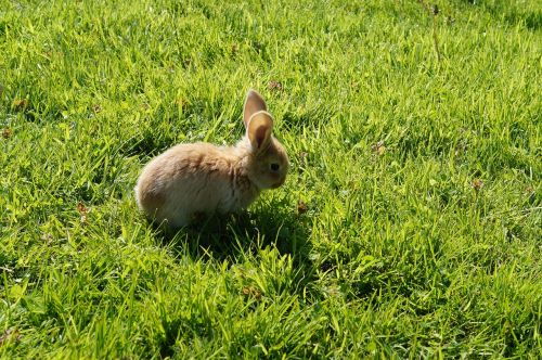 rabbit baby cute