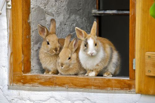 rabbit farm window