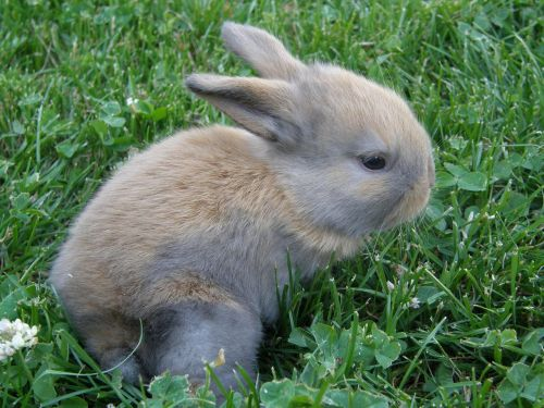 rabbit baby pet