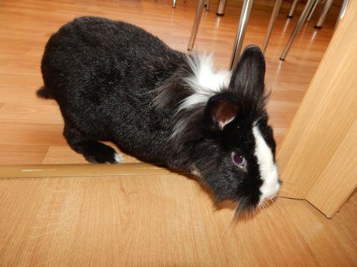 rabbit animal favorite
