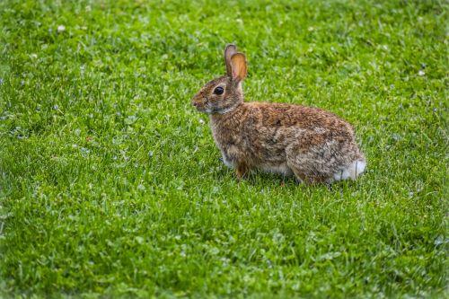 rabbit nature animal