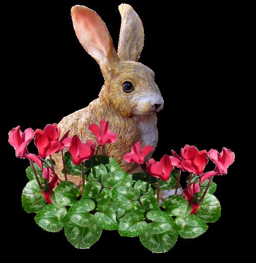 rabbit in cyclamen