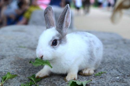 rabbit pool grass