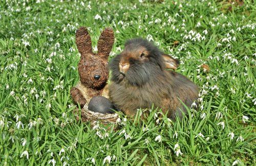 rabbit snowdrop amorous bunny