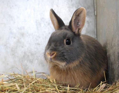 rabbit  hare  cute
