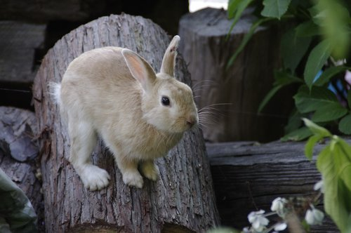 rabbit  bunny  animal