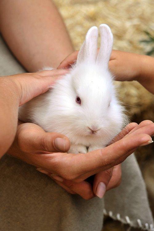 rabbit  animals  rodents