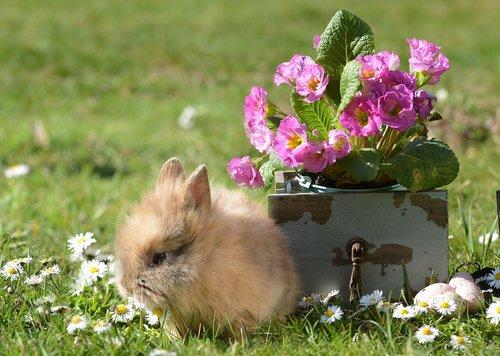 rabbit  easter  hare