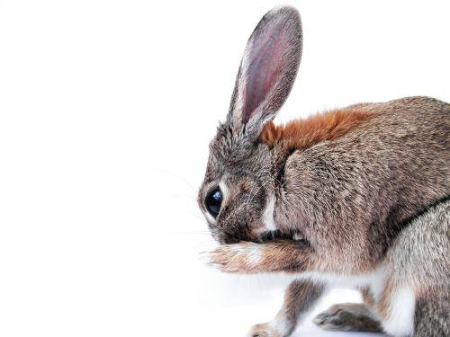 rabbit cute paw