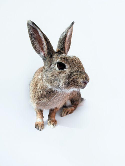 rabbit bunny leaning