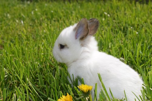 rabbit ears  climate protection  easter pictures