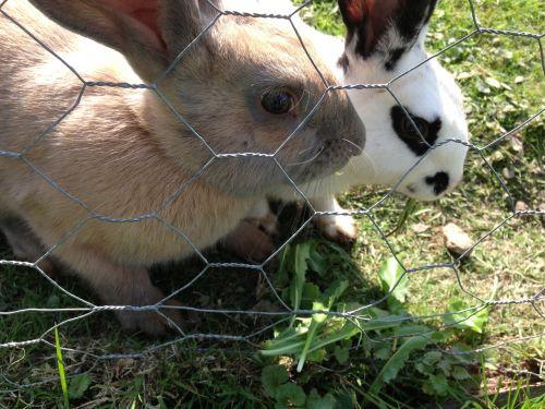 rabbits farm bunny