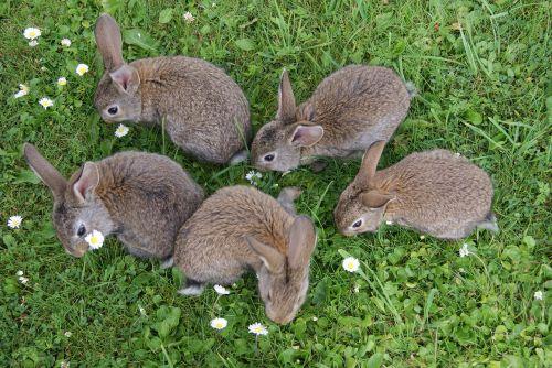 rabbits grass fur