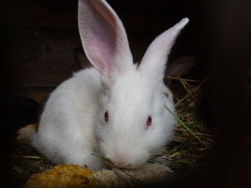 rabbits rabbit animal