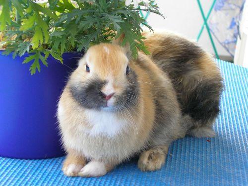 rabbits hare pet