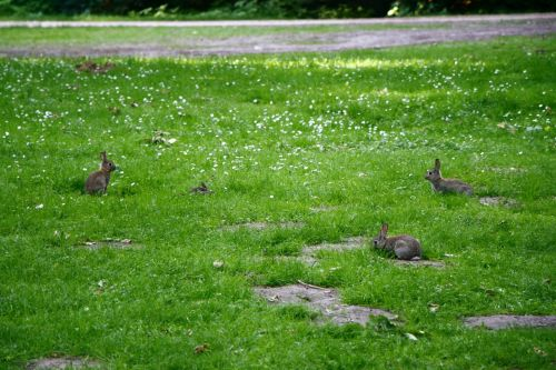 rabbits grass cute