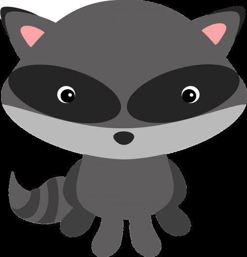 raccoon woodland animal