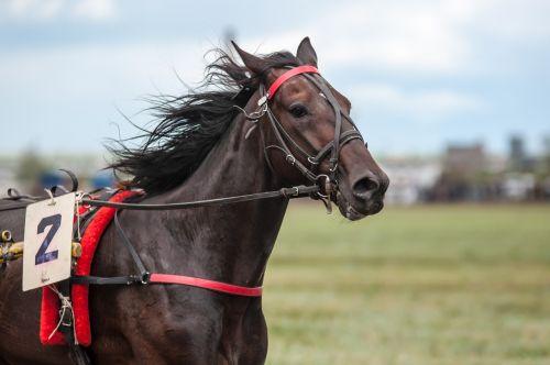 race horse racehorse