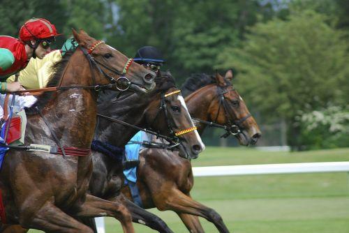 racecourse horses strained
