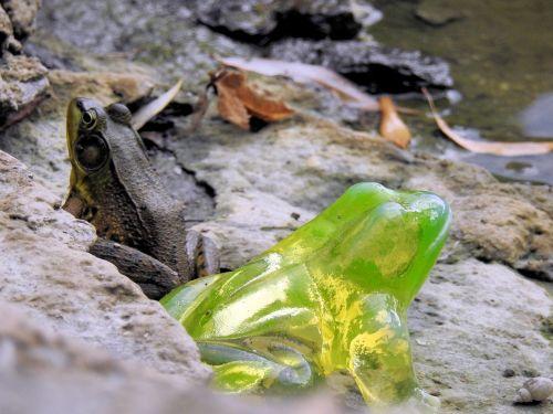 radioactive frog climate change toxic waste
