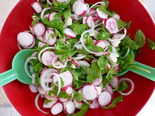 radischen salad vegetables