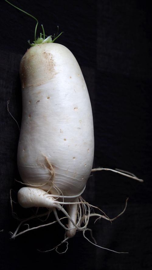 radish white raphanus