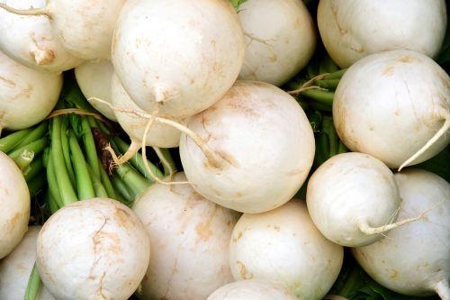 radish white white radish