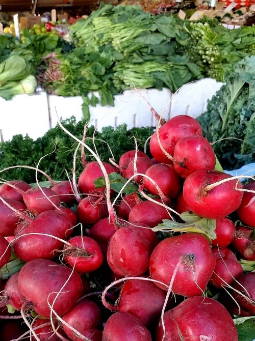 radish vegetables market
