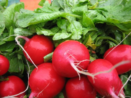 radish food vegetable